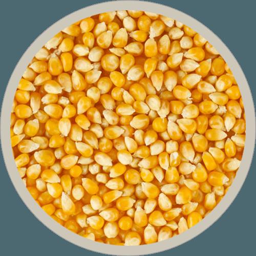non-GMO organic corn